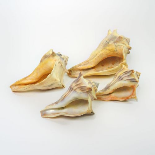 Set of Four Different Sized and Style Vintage Conch Shells